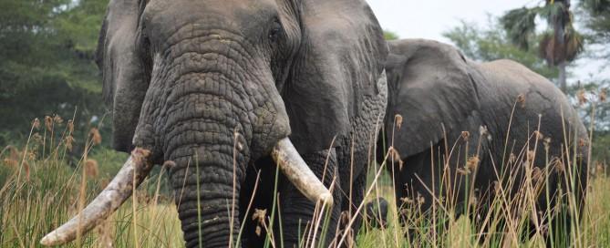 2.els-cecs-i-els-elefants